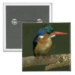Malachite Kingfisher 2 Inch Square Button