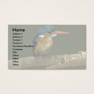 Malachite Kingfisher Business Card