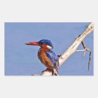 Malachite Kingfisher Rectangular Sticker