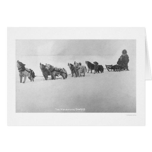 Malamute Chorus Alaska 1920 Greeting Card