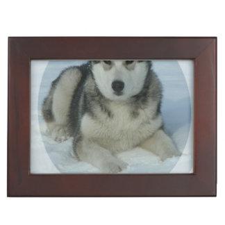 Malamute de Alaska lindo Cajas De Recuerdos