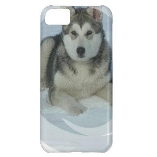 Malamute de Alaska lindo Funda Para iPhone 5C