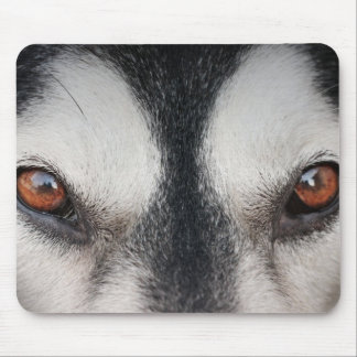 Malamute Dog Brown Eyes Mouse Pad