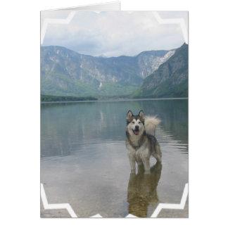 Malamute Dog Greeting Card