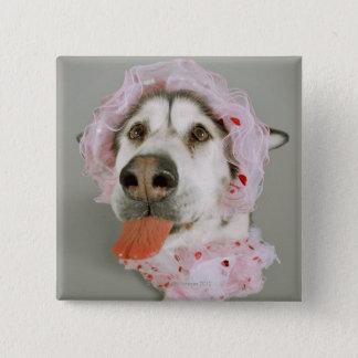 Malamute Dog Wearing a Tutu and Sticking Out Button