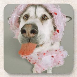 Malamute Dog Wearing a Tutu and Sticking Out Coaster