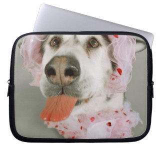 Malamute Dog Wearing a Tutu and Sticking Out Computer Sleeve