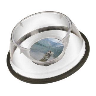 Malamute Dog Pet Bowl