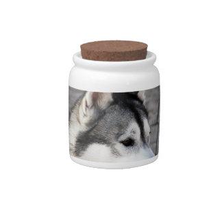 Malamute Photo Candy Jar