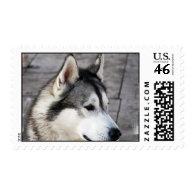 Malamute Photo Stamp