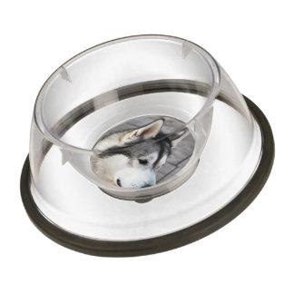 Malamute Photo Pet Bowl