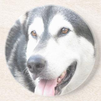 Malamutte pet dog coasters