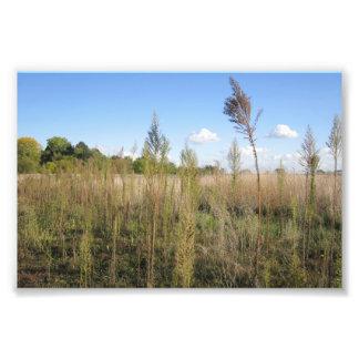 Malas hierbas, árboles, y impresión de la foto del fotografía