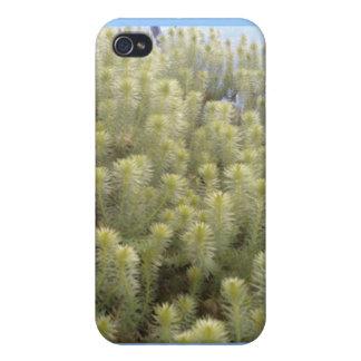 Malas hierbas blancas iPhone 4 protectores