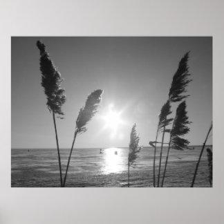 Malas hierbas blancos y negros póster