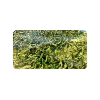 Malas hierbas del agua bajo fondo del agua etiquetas de dirección