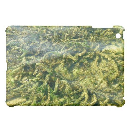Malas hierbas del agua bajo fondo del agua