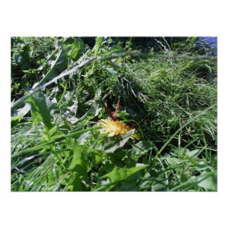 Malas hierbas del jardín que obstruyen la póster
