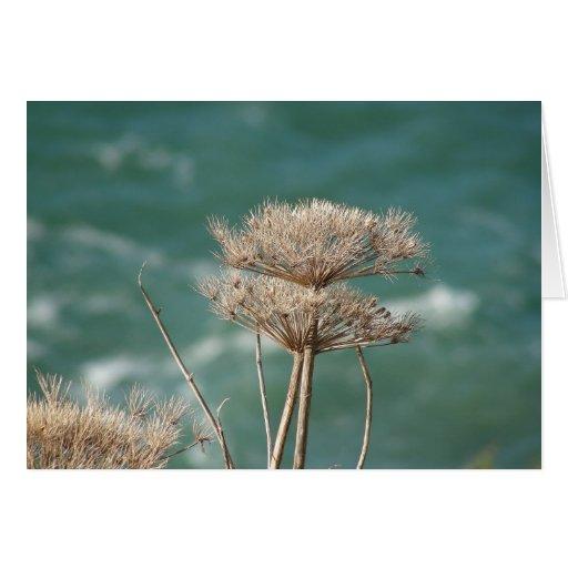 Malas hierbas del océano tarjeta de felicitación