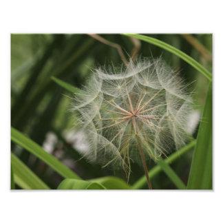 Malas hierbas en mi cama de flor fotografía