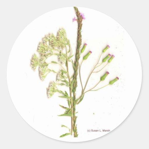 Malas hierbas, una exploración de los wildflowers  pegatinas redondas