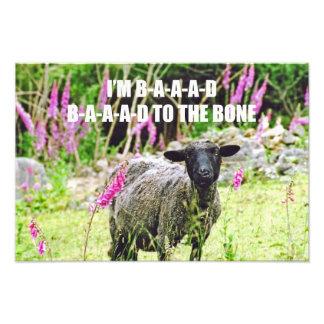 Malas ovejas negras arte fotográfico