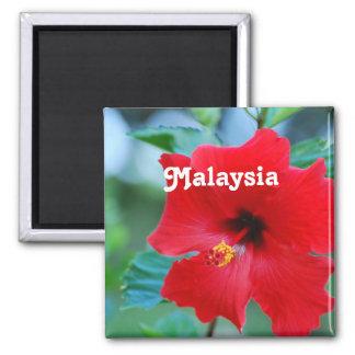 Malasia Imán Cuadrado