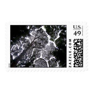 Malasia ningunos árboles del tacto: tarjeta en envio