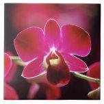 Malasia, orquídea azulejo cuadrado grande