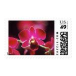 Malasia, orquídea envio