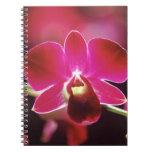 Malasia, orquídea libros de apuntes