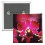 Malasia, orquídea pin cuadrado