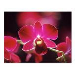 Malasia, orquídea postal