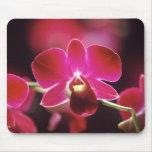 Malasia, orquídea tapete de ratón