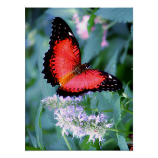 Malay Lacewing Poster