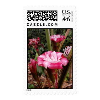 Malay Rose Postage Stamps