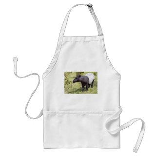 Malayan tapir on grass adult apron