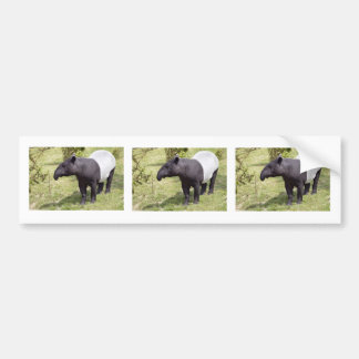 Malayan tapir on grass bumper sticker
