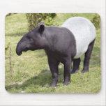 Malayan tapir on grass mouse pad