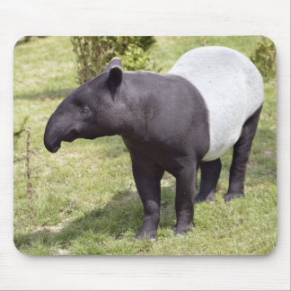 Malayan tapir on grass mouse pad