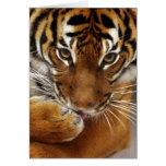 Malayan Tiger #1 card