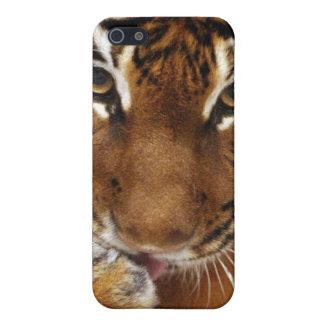 Malayan Tiger #1 iPhone 4 case