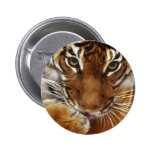 Malayan Tiger #1 pin