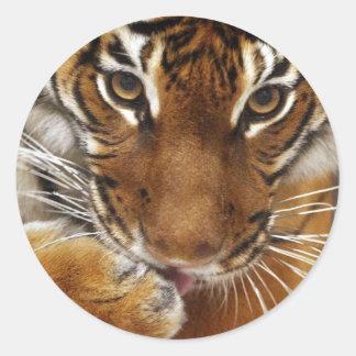 Malayan Tiger #1 sticker