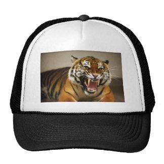 Malayan Tiger #2 hat