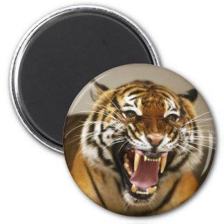 Malayan Tiger #2 magnet