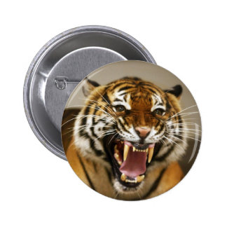 Malayan Tiger #2 pin