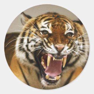 Malayan Tiger #2 sticker