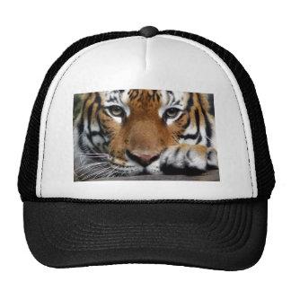 Malayan Tiger #3 hat