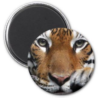 Malayan Tiger #3 magnet
